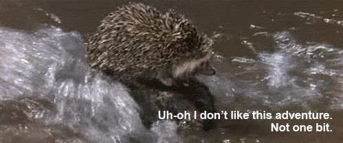 9f78128f4a09dff5d3cd44f4d20cbcec--funny-hedgehog-hedgehog-pet